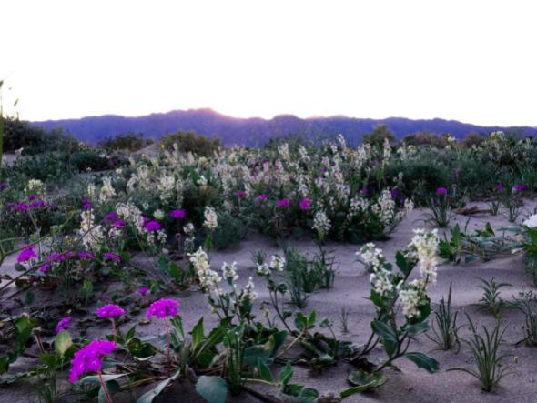 Anaza-Borrego Desert CA 3.png