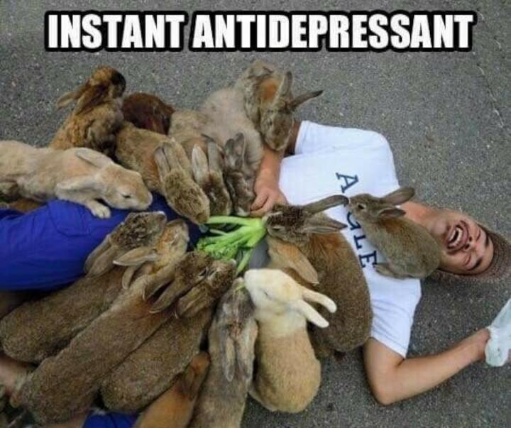 antidepressant.jpeg