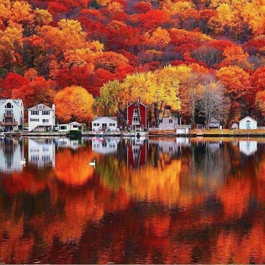 Autumn Lakefront.jpg