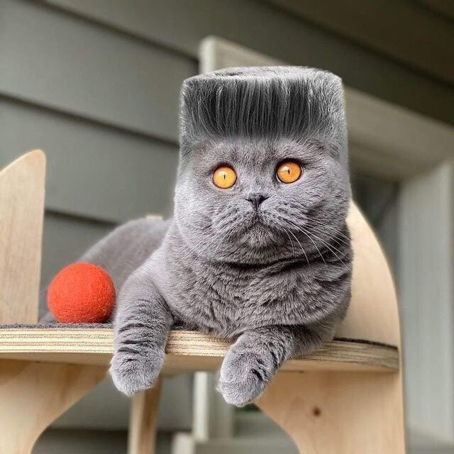 Butch cat.jpeg