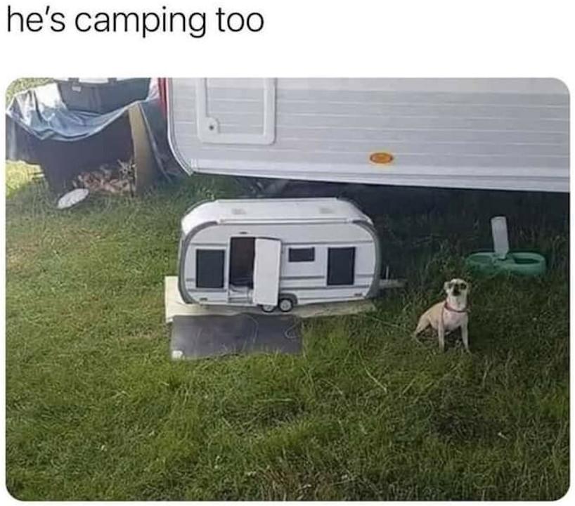 camping dog.jpg