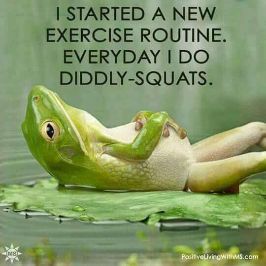 diddly squats.jpg