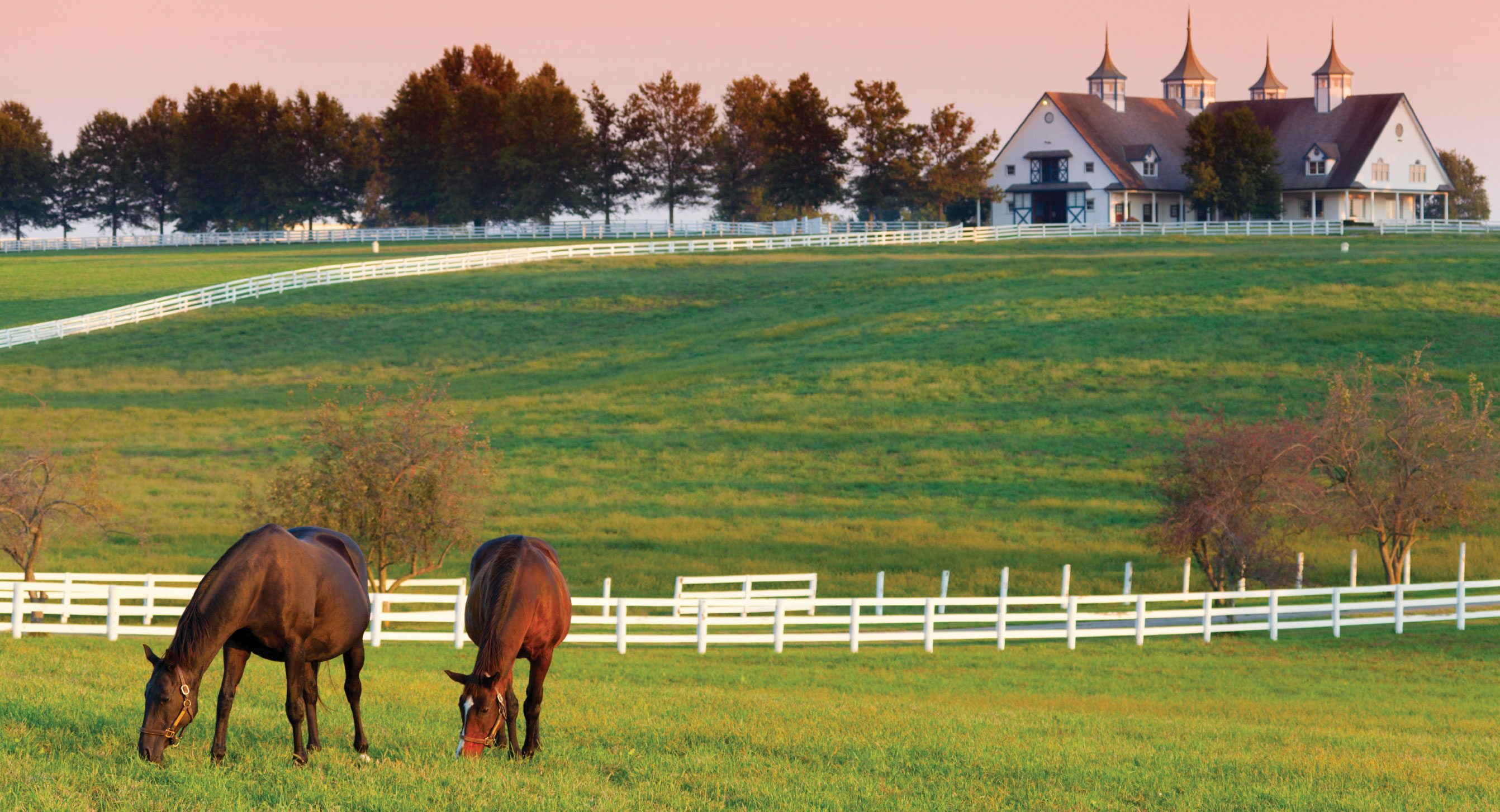 Kentucky-Horse-Farm.jpg