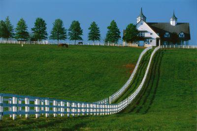 manchester-farm-in-kentucky-594417834-59472cdd3df78c537b5845da.jpg