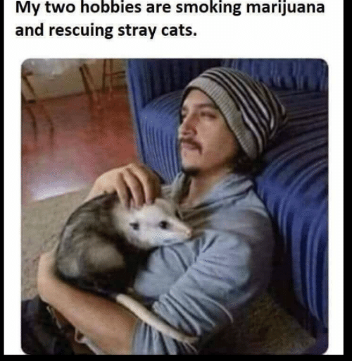 my-two-hobbies-are-smoking-marijuana-and-rescuing-stray-cats-45375448.png