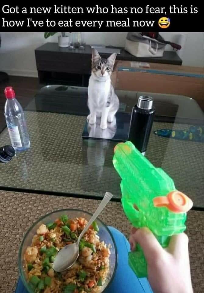p kitten.jpg