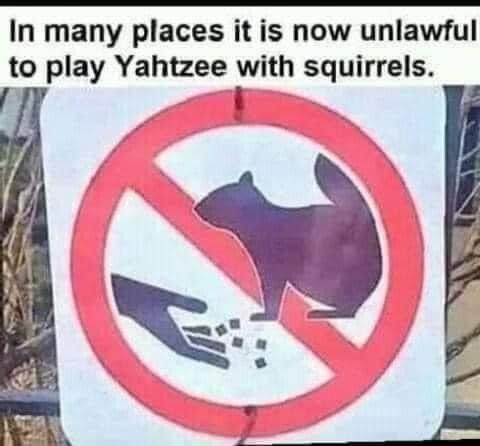 squirrls.jpg