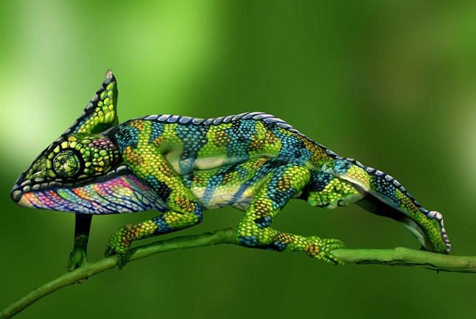 Take A Close Look At This Chameleon.jpg
