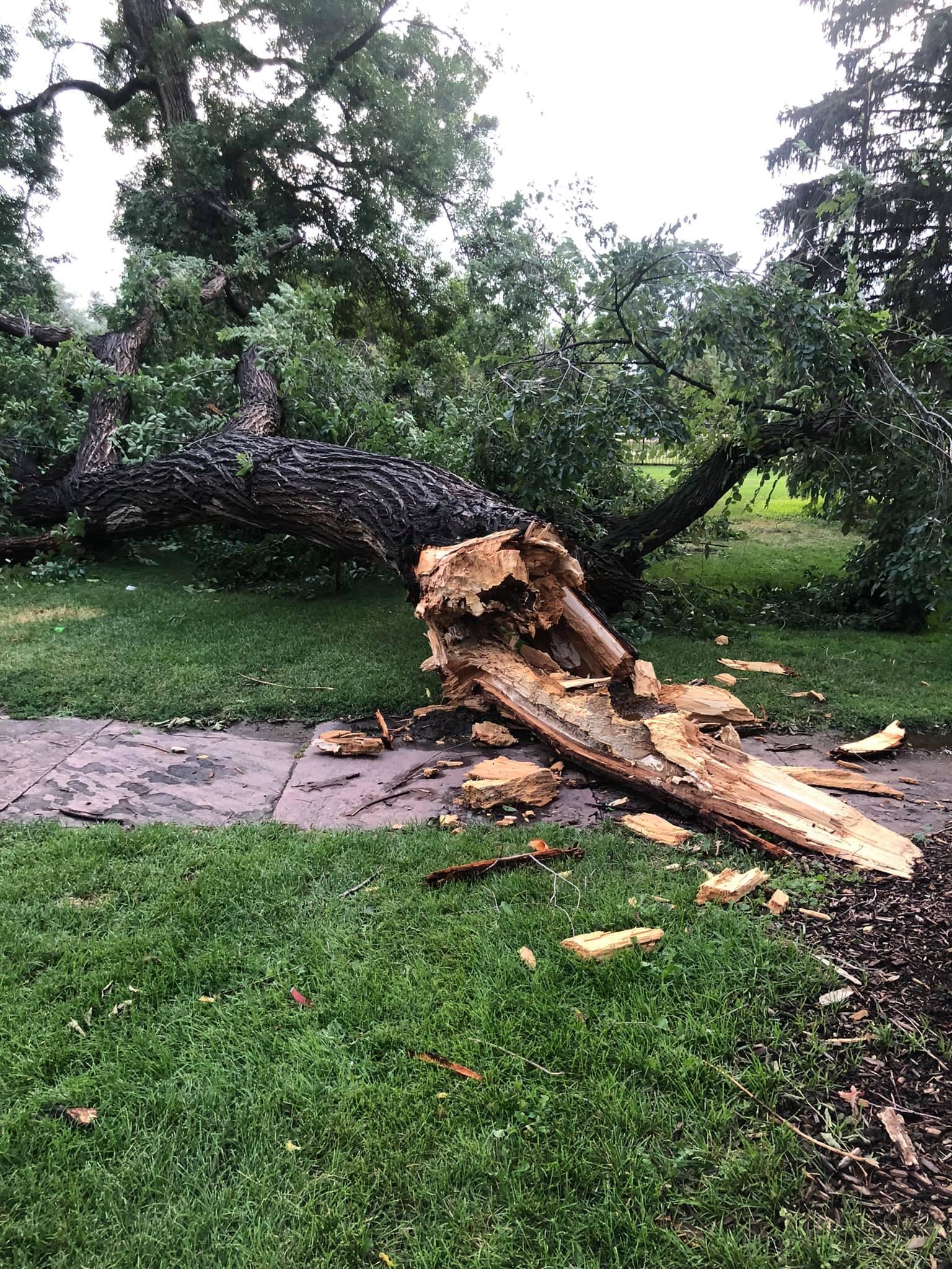tree down at Fuller.jpg