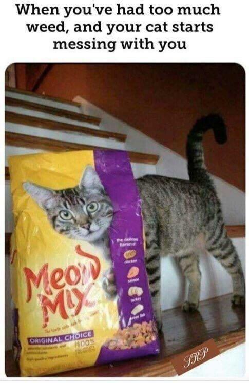 weed cat.jpeg